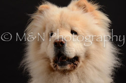 M&N Photography -DSC_9682