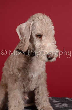 M&N Photography -DSC_3772