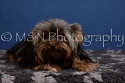 M&N Photography -DSC_5196