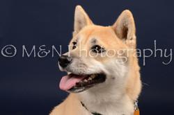 M&N Photography -DSC_0662