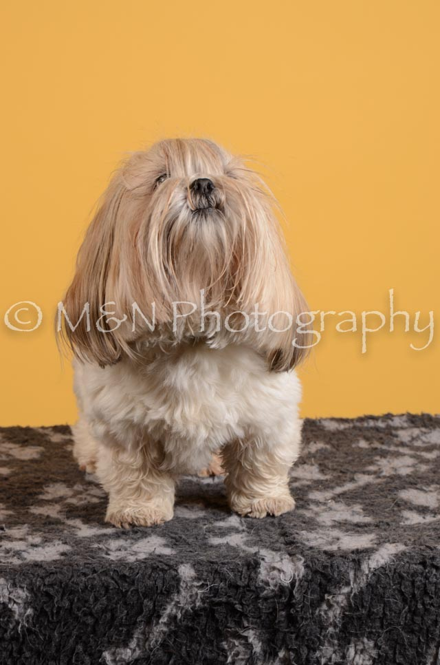 M&N Photography -DSC_4840