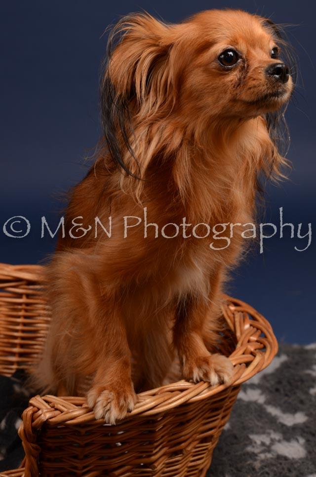 M&N Photography -DSC_0271