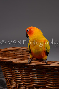 M&N Photography -DSC_2120