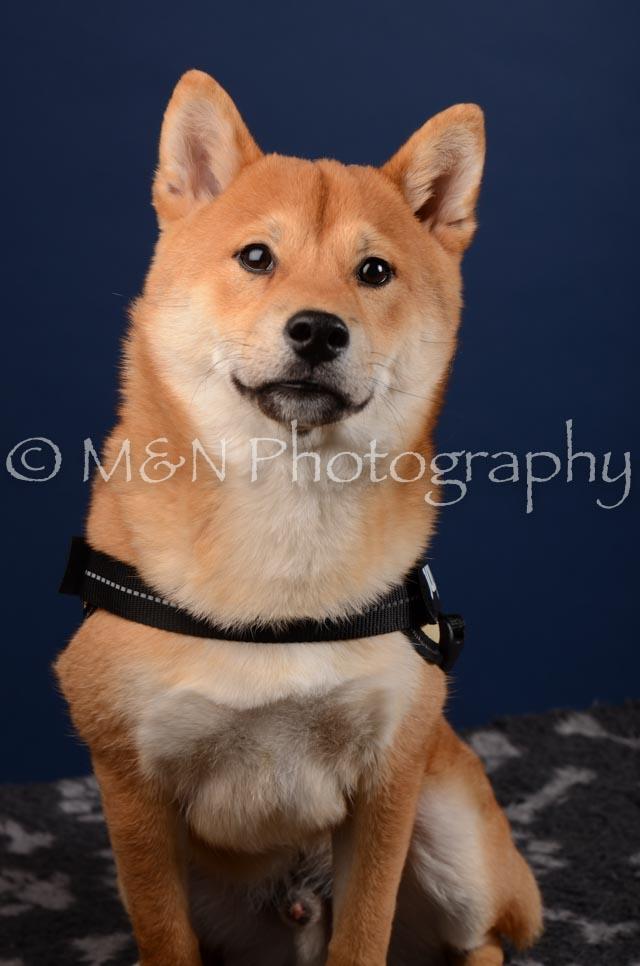 M&N Photography -DSC_4224