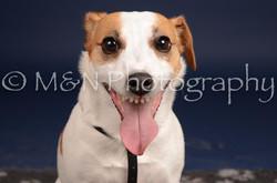 M&N Photography -DSC_0326
