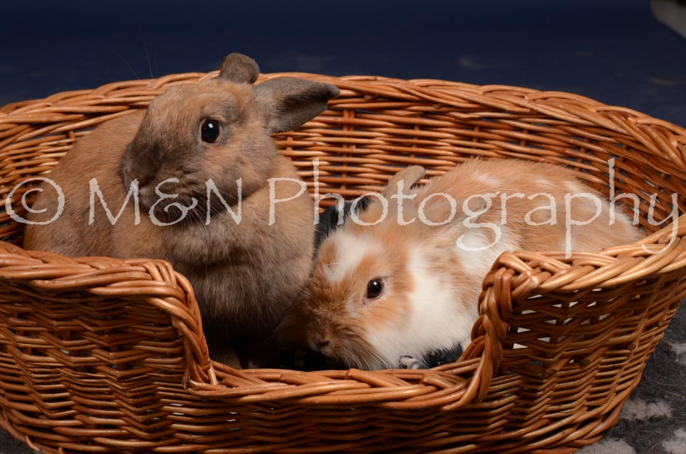 M&N Photography -DSC_0781