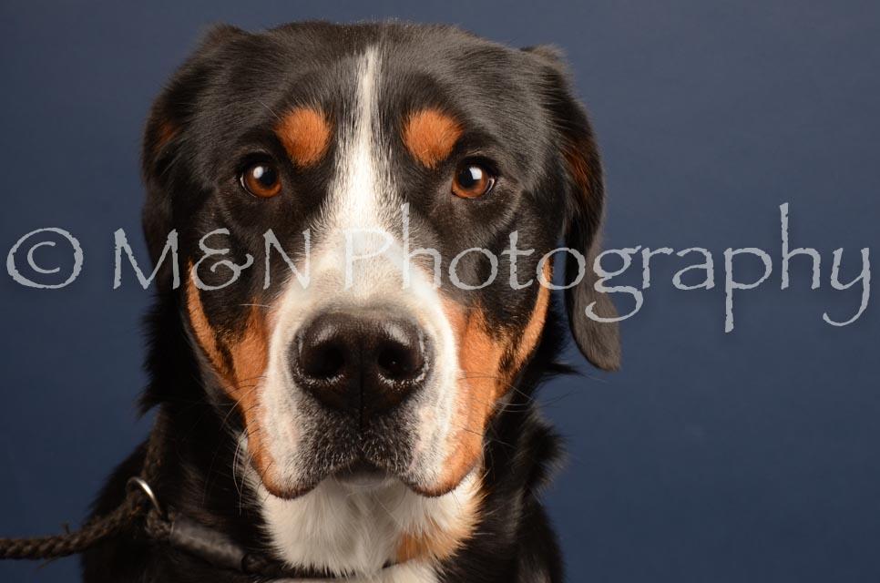 M&N Photography -DSC_4419