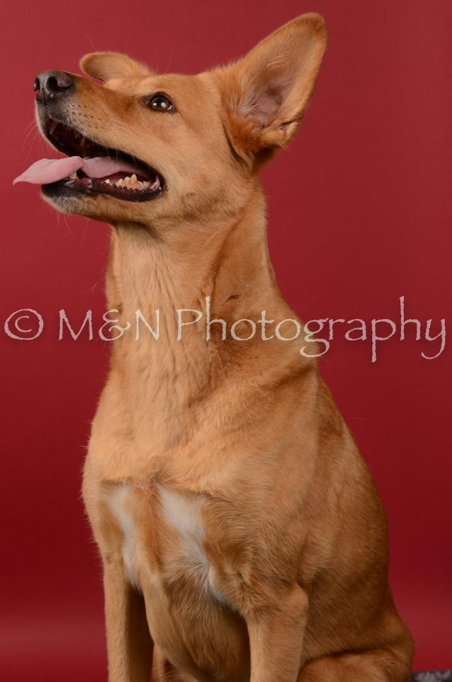M&N Photography -DSC_6742
