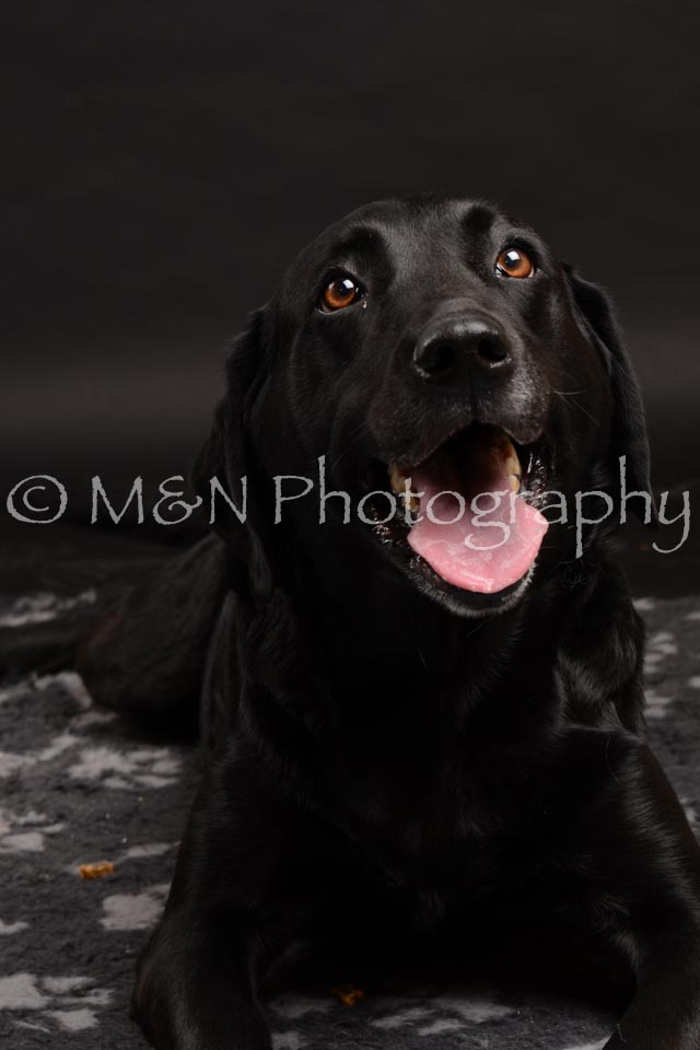 M&N Photography -DSC_0025