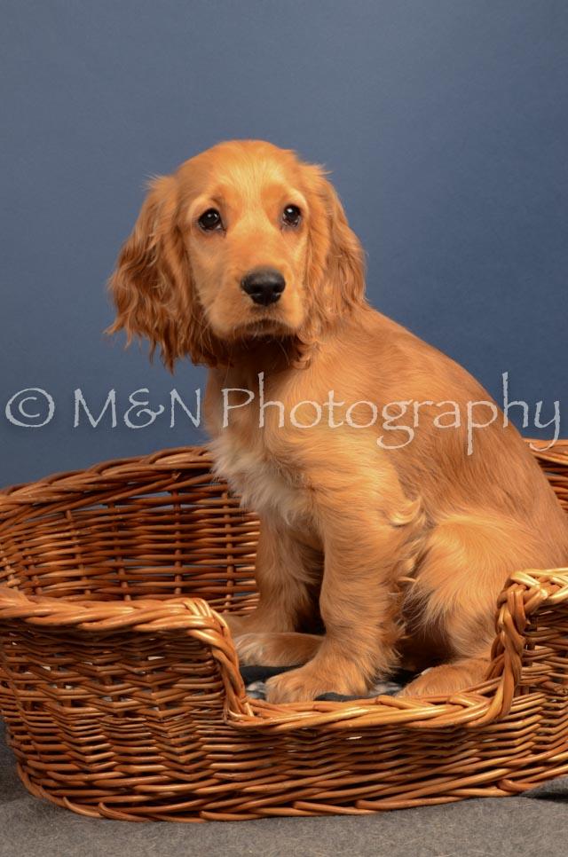 M&N Photography -DSC_4288