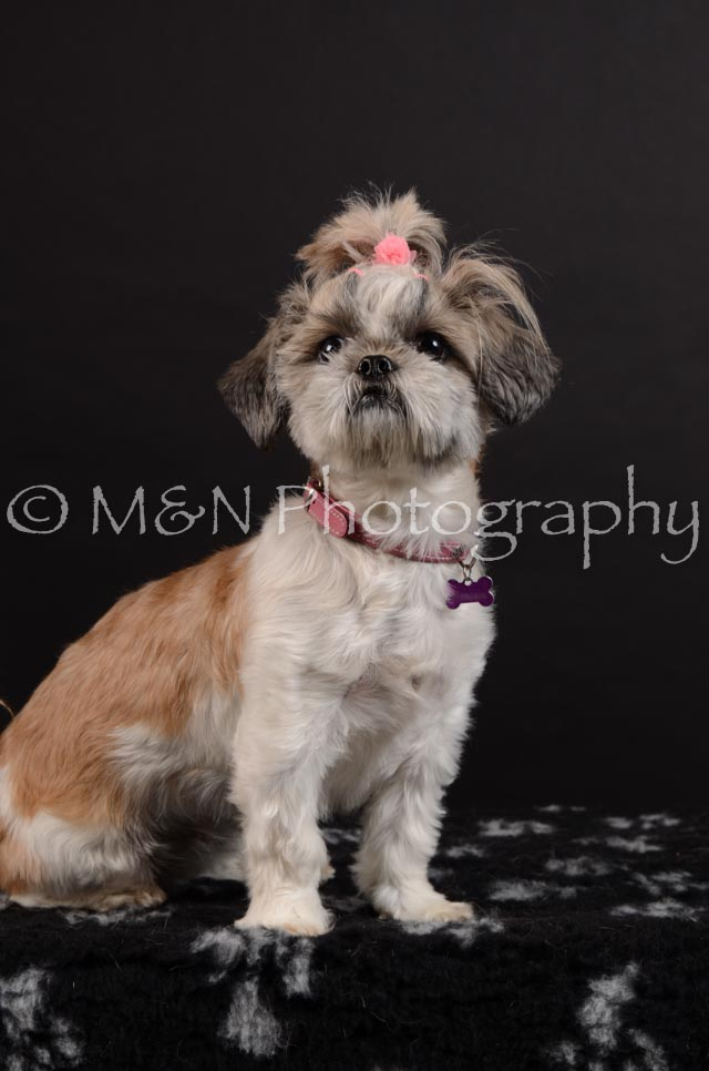M&N Photography -DSC_5985