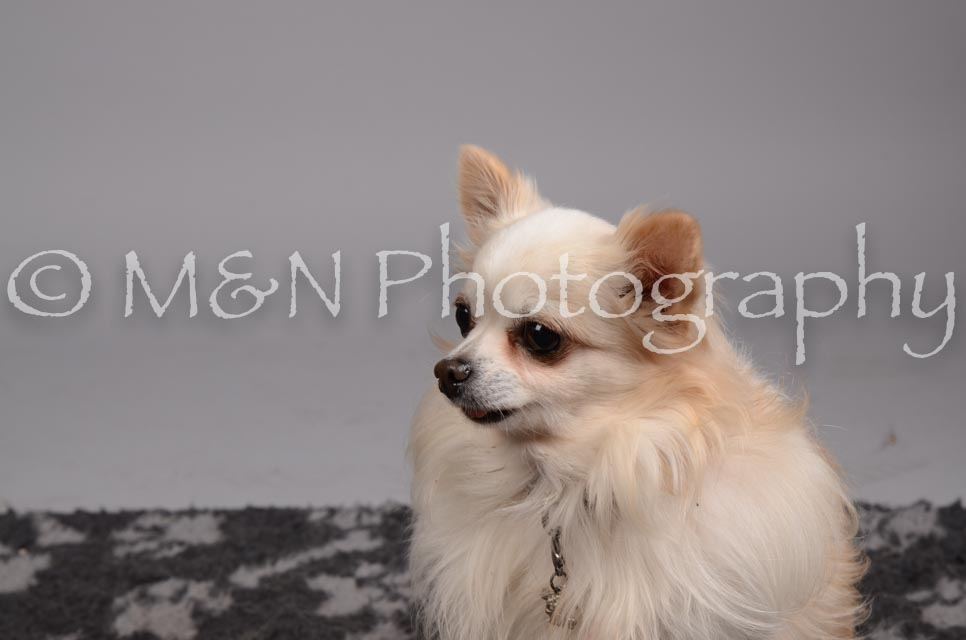 M&N Photography -DSC_2922