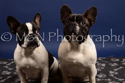 M&N Photography -IMG_4740