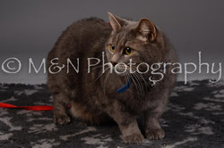 M&N Photography -DSC_2096
