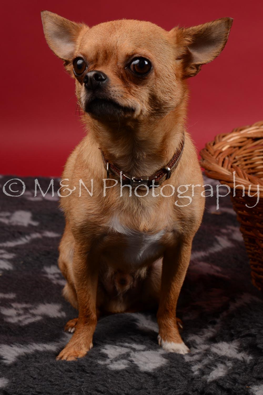 M&N Photography -DSC_8665
