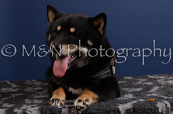 M&N Photography -DSC_4237