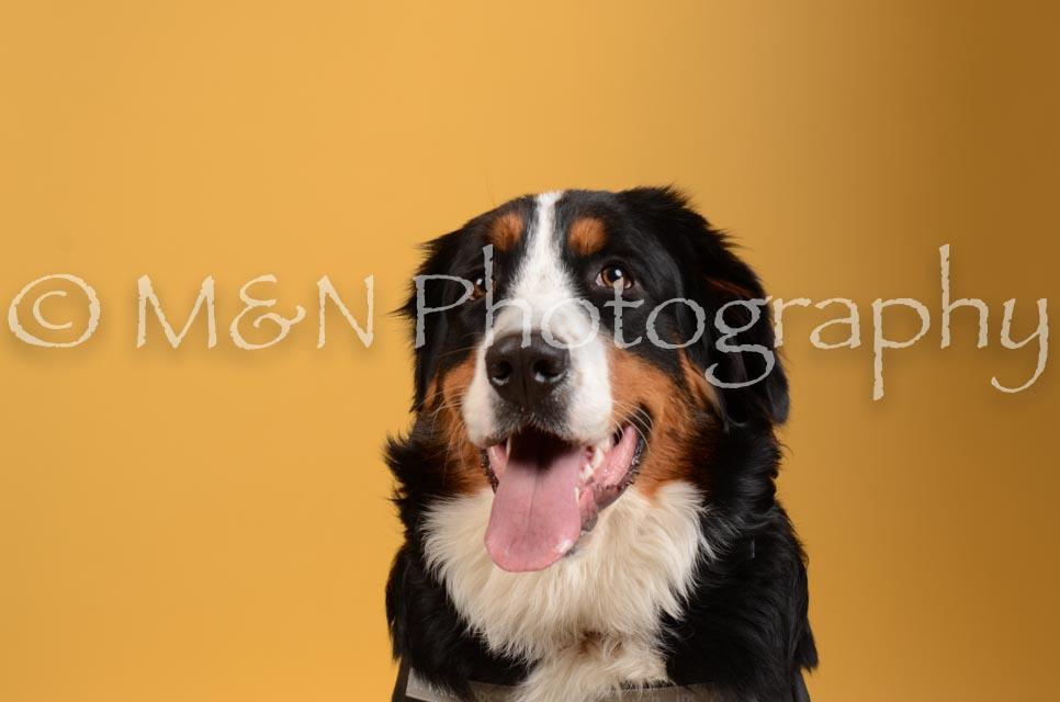M&N Photography -DSC_4590
