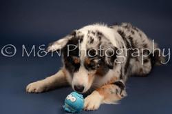 M&N Photography -DSC_4007