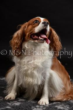 M&N Photography -DSC_2651