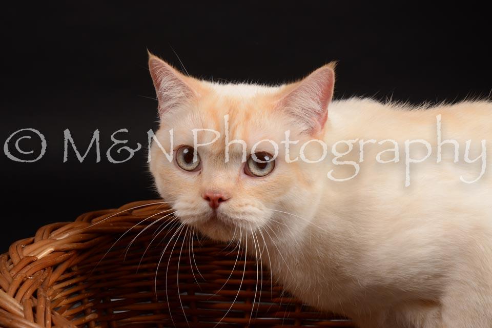M&N Photography -DSC_9641