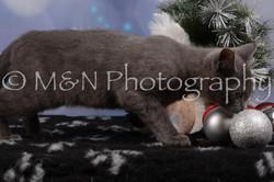 M&N Photography -DSC_6536