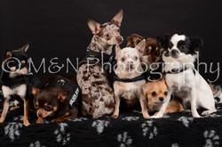 M&N Photography -DSC_5551