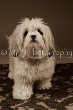 M&N Photography -DSC_2045