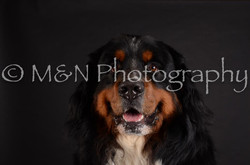 M&N Photography -DSC_5711