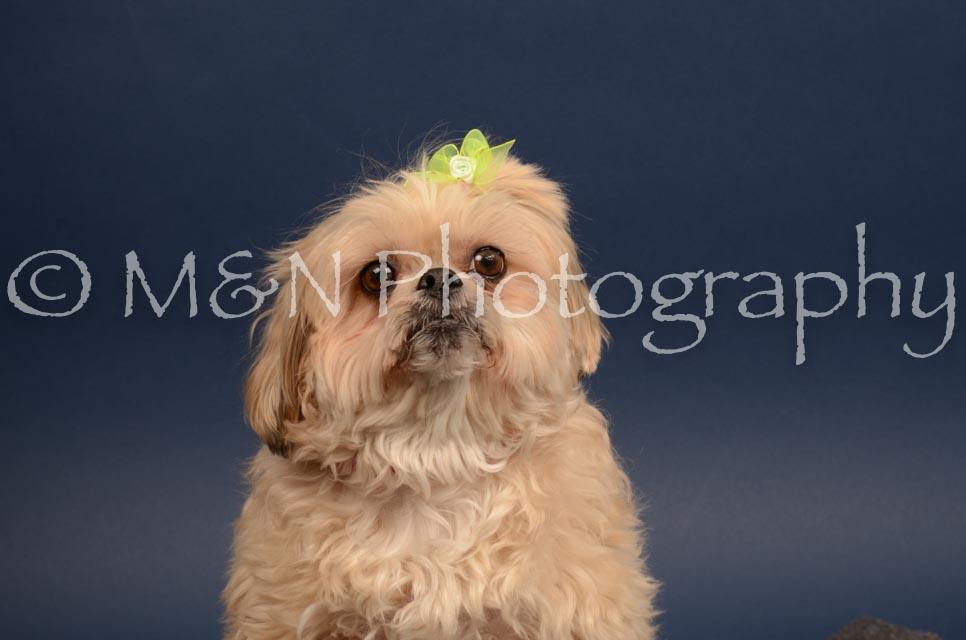 M&N Photography -DSC_4475