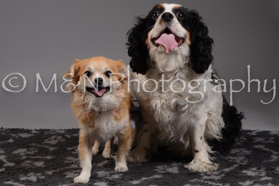 M&N Photography -DSC_2010