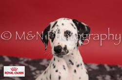 M&N Photography -M&N Photography-DSC_6801