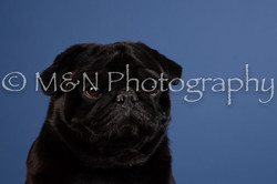 M&N Photography -DSC_5074