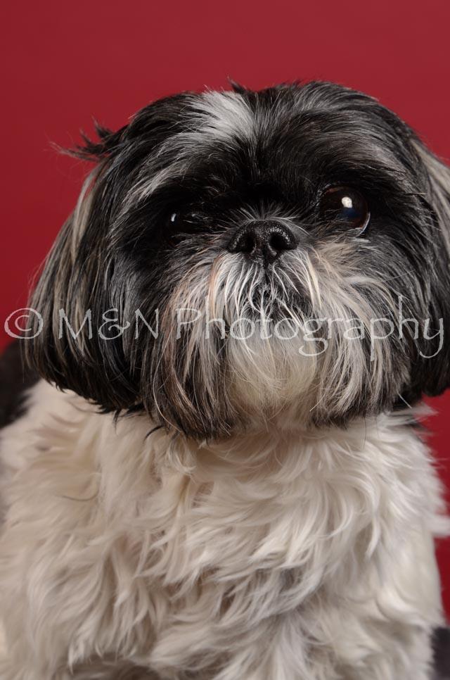 M&N Photography -DSC_3594