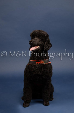 M&N Photography -DSC_3958