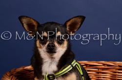 M&N Photography -IMG_4503