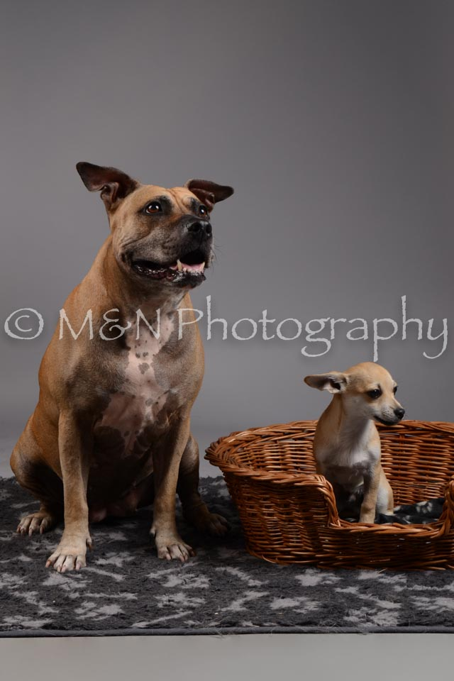 M&N Photography -DSC_1877