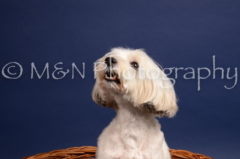 M&N Photography -IMG_4579