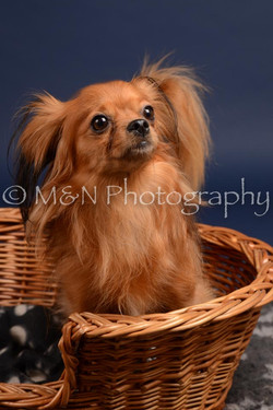 M&N Photography -DSC_0267