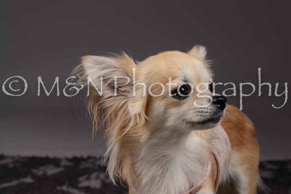 M&N Photography -DSC_2225