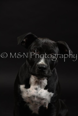 M&N Photography -DSC_2654