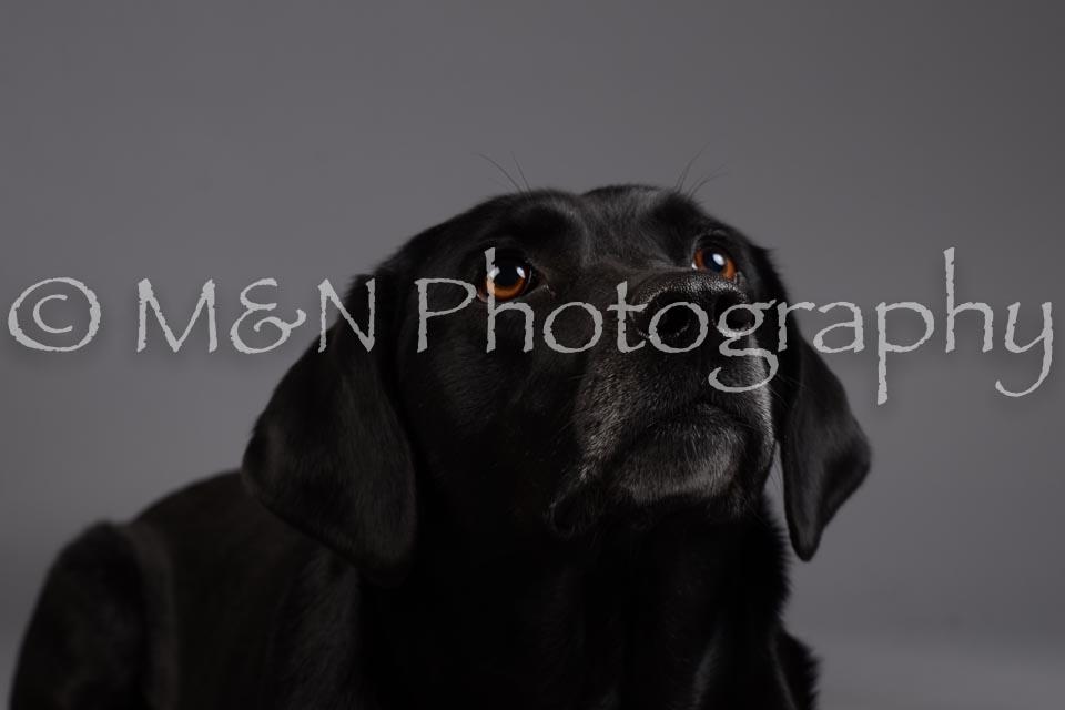 M&N Photography -DSC_2032