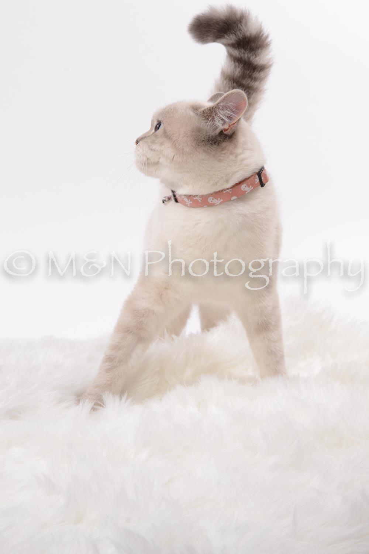 M&N Photography -DSC_8812
