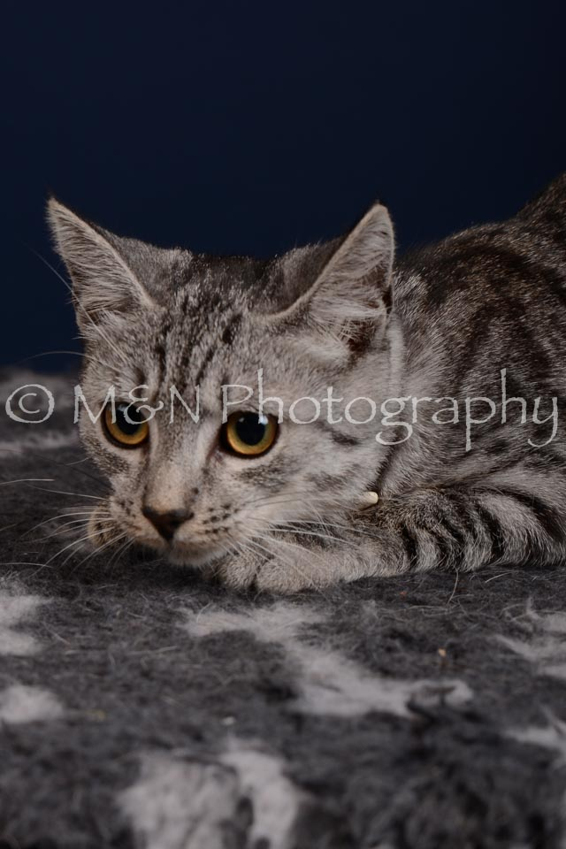 M&N Photography -DSC_4262