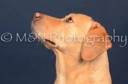 M&N Photography -DSC_4040