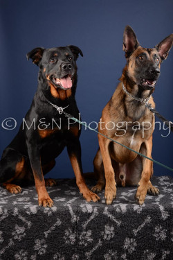 M&N Photography -DSC_4000
