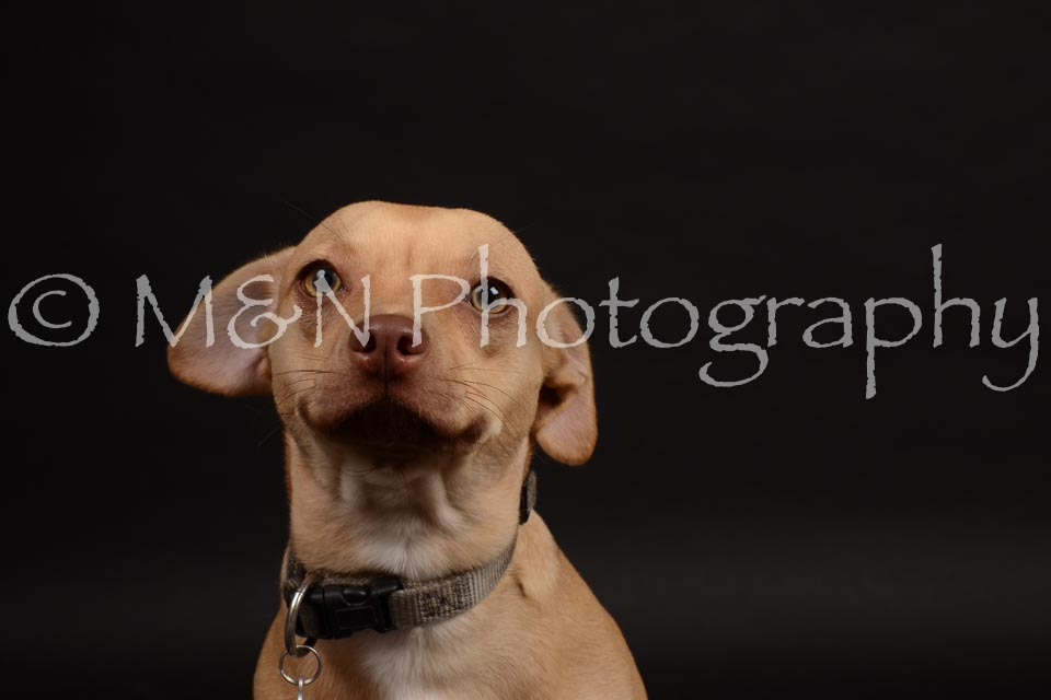 M&N Photography -DSC_0112