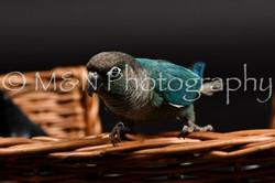 M&N Photography -DSC_2451