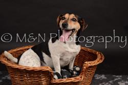 M&N Photography -DSC_0052