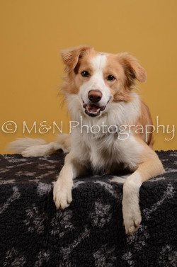 M&N Photography -DSC_4498
