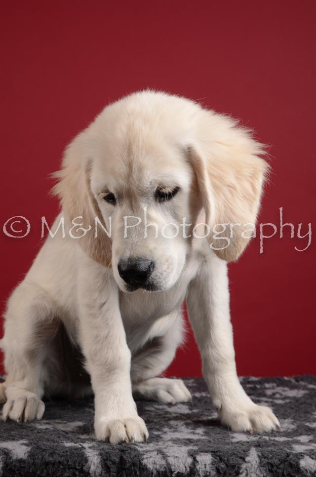M&N Photography -DSC_3073